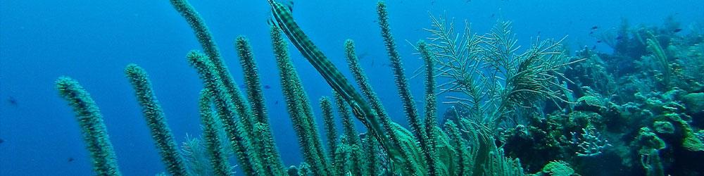 mer qui soigne