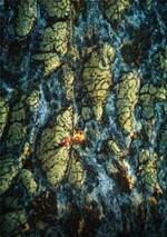 Prise de vue aérienne d'une coupe d'épithélium intestinal de souris par tomographie par cohérence optique plein champ (FF-OCT). Tel un archipel à la surface de l'océan, l'épithélium intestinal se compose de cellules épithéliales (jaune/orangé) qui...